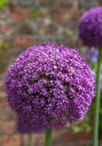 Dorchester Open Gardens @ Dorchester Abbey   Dorchester   United Kingdom